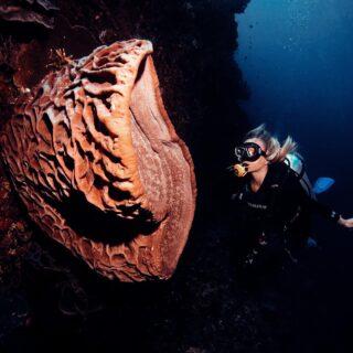 """Nie sądziłam, że podwodne życie jest tak bardzo wielobarwne! Tam się dzieje prawdziwa magia😍🤯🦐🐡 Oczywiście znałam, te """"obrazki"""" z filmów National Geographic, ale gdy pływałam w """"chmurze"""" tysiąca maleńkich rybek lub zobaczyłam to """"coś"""" ze zdjęcia, co nazywa się Salvador Dali sponge (czyli gąbka) jeszcze bardziej uzmysłowiłam sobie,że ja jestem tylko maleńką kropeczką we wszechświecie i o istnieniu tak wielu rzeczy nie mam jeszcze pojecia i być może nigdy się o tym nie dowiem. Salavdor Dali sponge występuje w bardzo nie wielu miejscach na świecie (podobno tylko tu na SULAWESI) dlatego chętnie dziele się z Wami tym widokiem 😍 Co Wy takiego """"unikatowego"""" przywieźliście w spomnieniwch swoich podróży? . #salvadordalisponge #sulawesi #gorontalo #underwaterlife"""